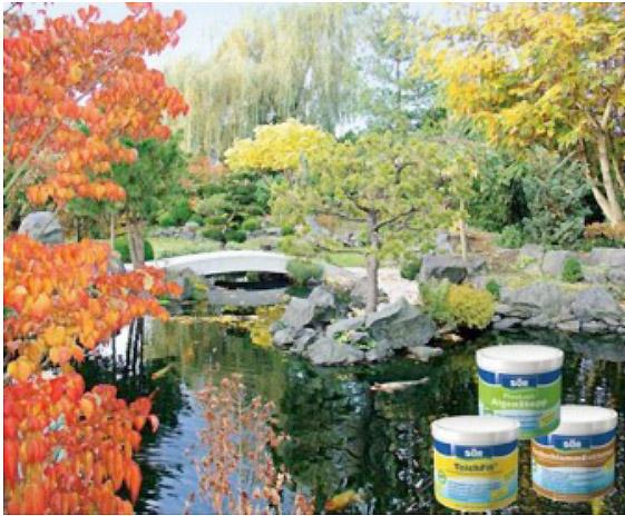 y cmo preparar bien su estanque de jardn en estas condiciones inestables y en el invierno te contamos nuestras sugerencias de otoo