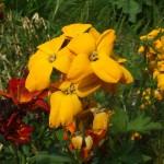 Flores , Plantas y Arboles