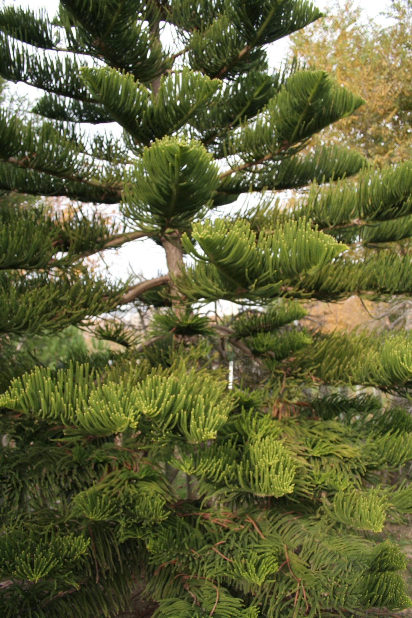 Botanico 008 noticias de paisajismo arte naturaleza y for Inscripcion jardin 2015