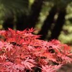 La muestra de Bonsái del Jardín Botánico de Barcelona espera nuevas visitas