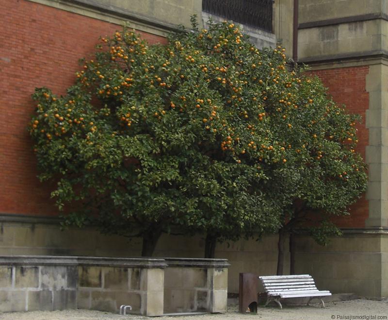 Un bello naranjo en un rincón urbano