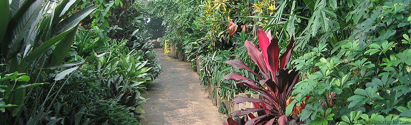 plantas_riego