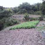 El ACOLCHADO, práctica beneficiosa para la protección del terreno