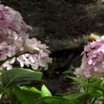 LA PODA , una sencilla actividad para el cuidado de arbustos