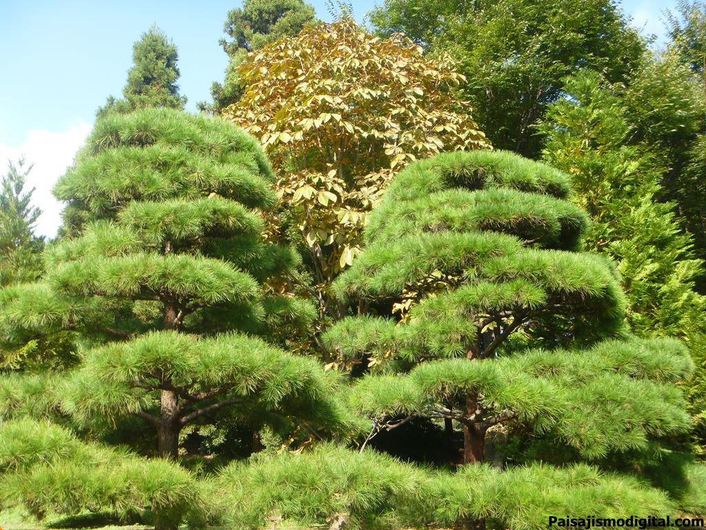 jardin botanico de iturraran noticias de paisajismo