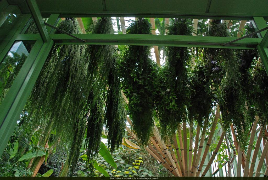 Patrick blanc pionero y creador de los jardines verticales for Historia de los jardines verticales
