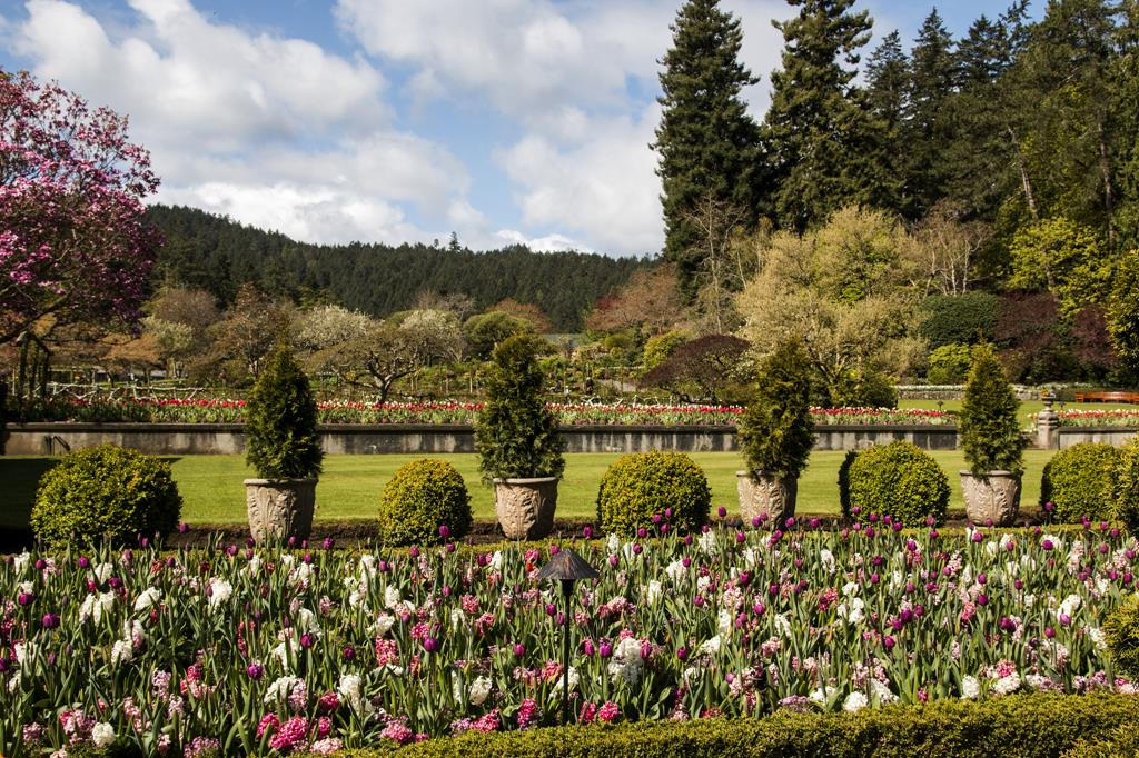 Jardines butchart noticias de paisajismo arte for Jardines butchart