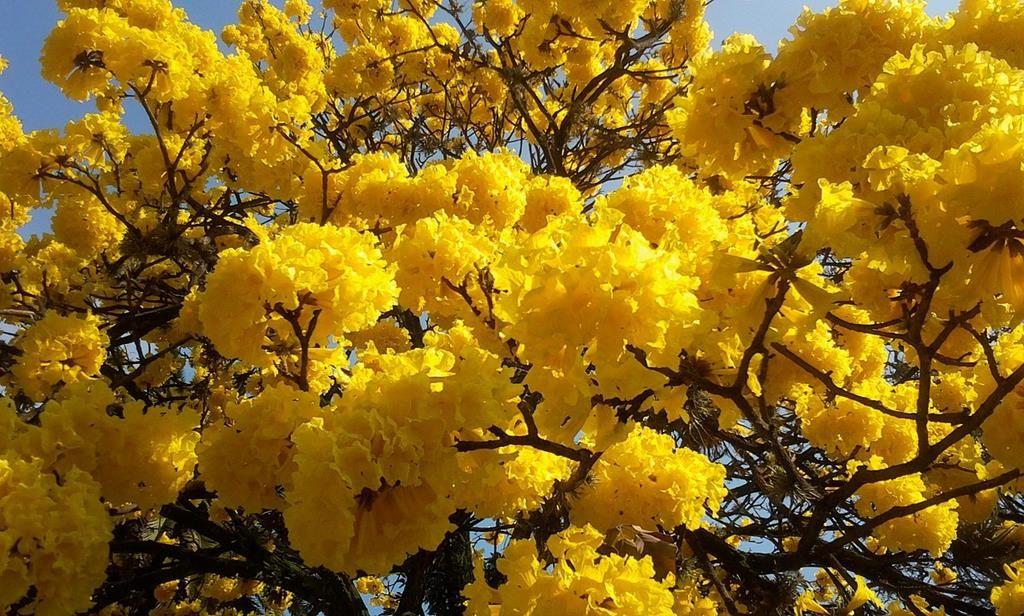 flores nacionales de sudamerica