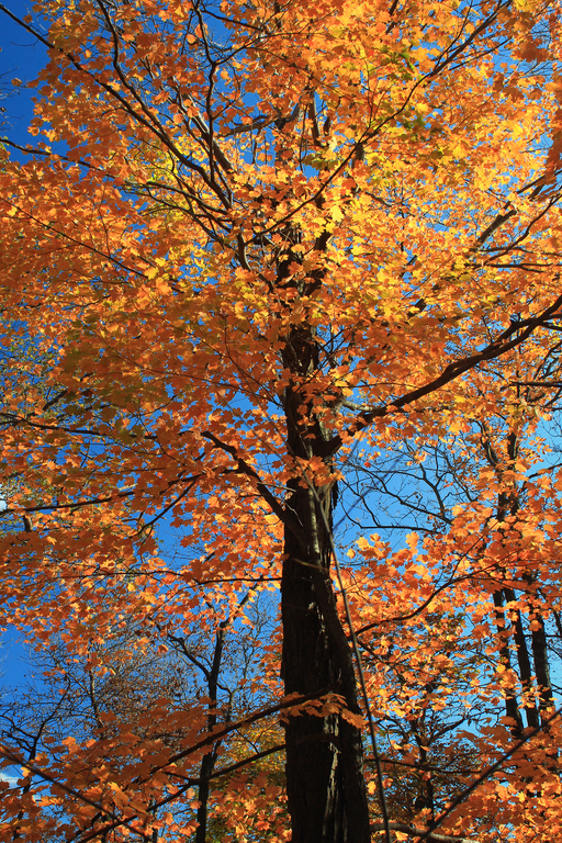 árboles nacionales de América
