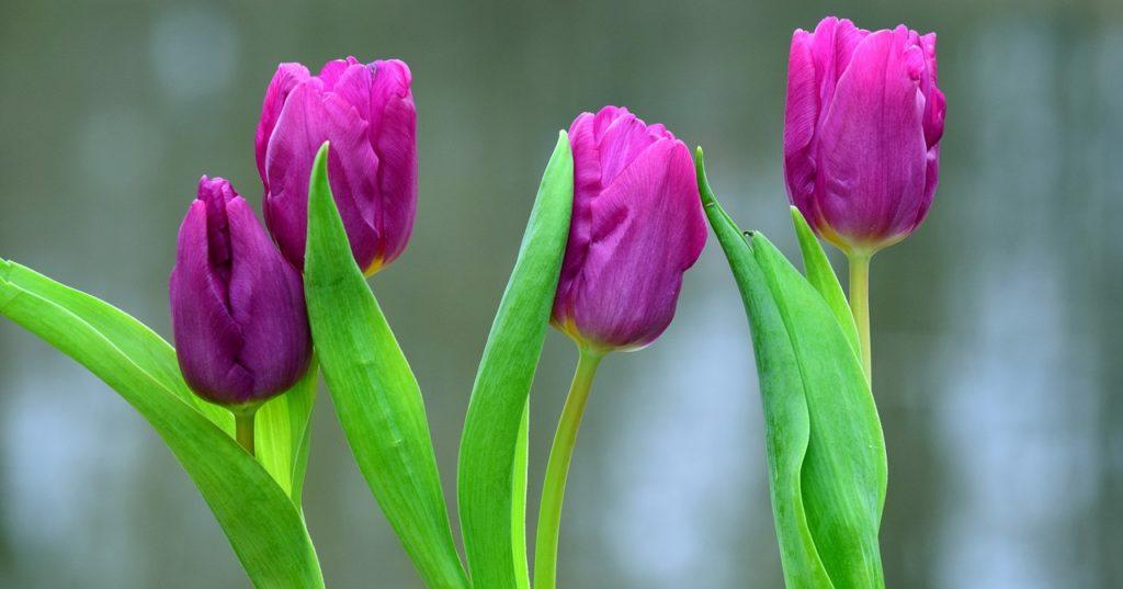 Las flores nacionales de Asia