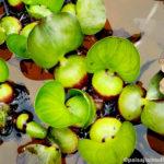 Las 10 PLANTAS más utilizadas en Jardines Acuáticos