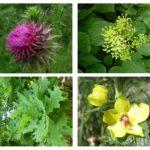 La PLANIFICACION DE ESPACIOS VERDES SUSTENTABLES, con la aplicación de especies nativas