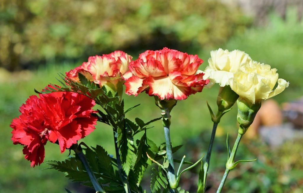 flores nacionales de África