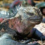 PARQUE NACIONAL GALÁPAGOS, el archipiélago volcánico mejor conservado del mundo