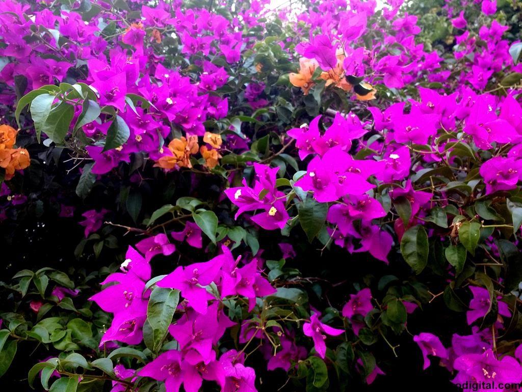 10 plantas ornamentales ideales para el oto o for Plantas ornamentales y medicinales