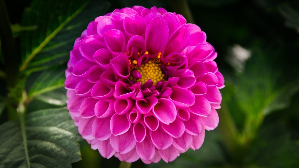 10 plantas ornamentales ideales para el oto o for Como se llaman las plantas ornamentales