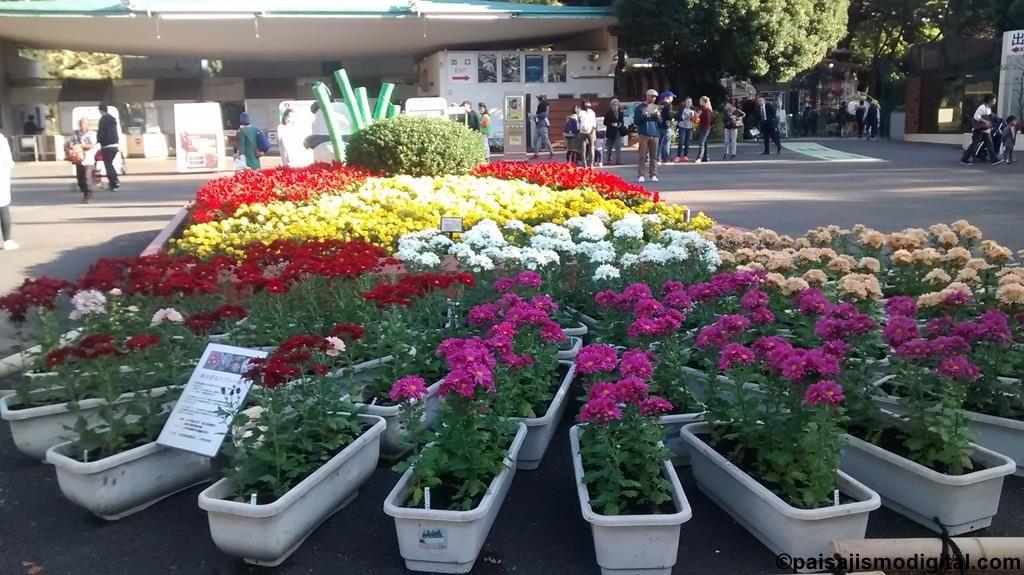 10 plantas ornamentales ideales para el oto o for Plantas decorativas ornamentales