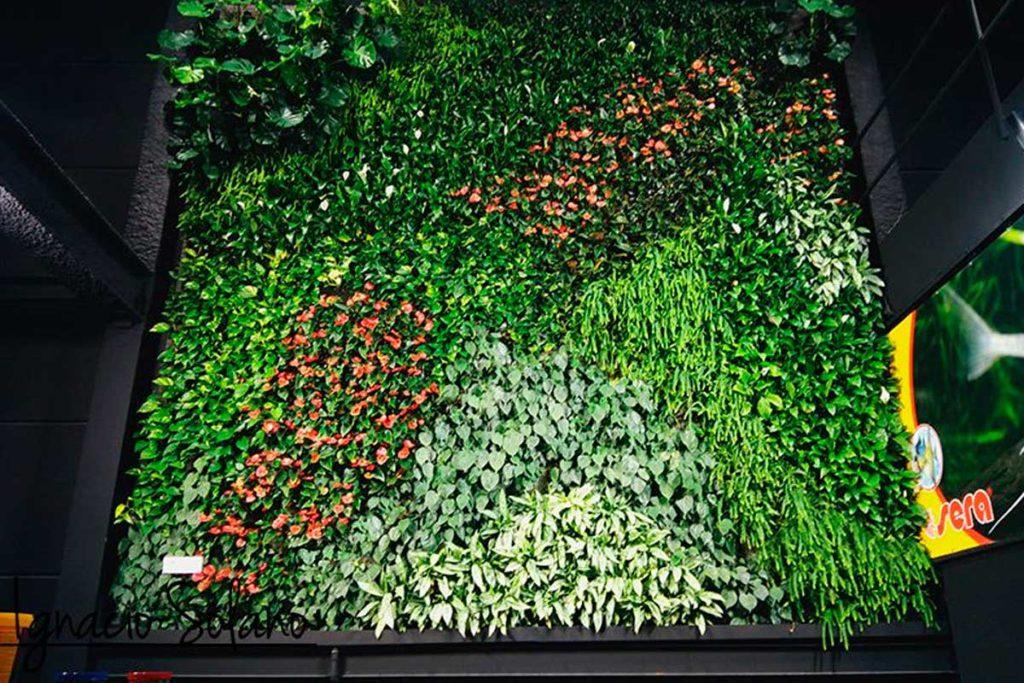 El jardín vertical interior de Ignacio Solano - Maskokotas, Valencia