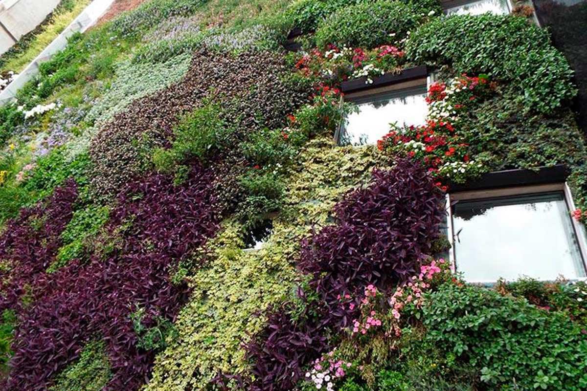 Importancia de las plantas nativas como recursos para la construcción de jardines verticales