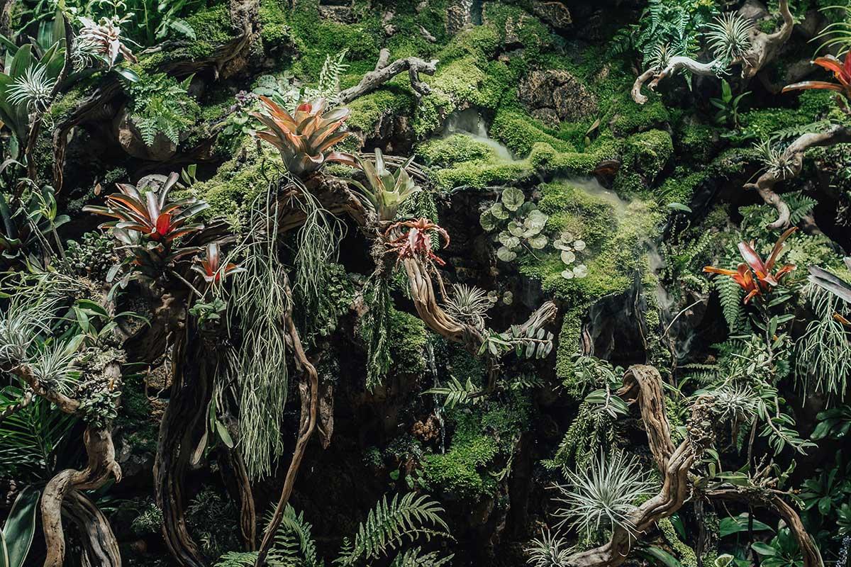 Razones para crear jardines verticales con plantas medicinales