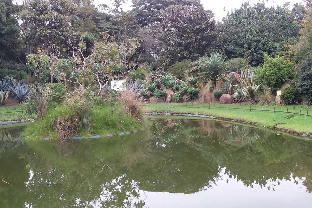 Importancia de las plantas nativas en la creación de hábitats para la fauna local