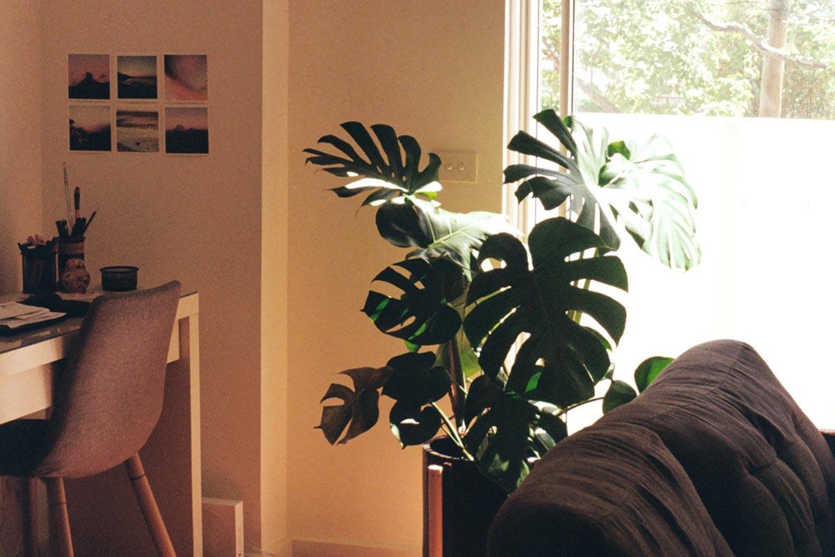 10 plantas ideales para jardinería vertical en interiores