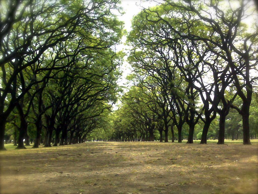Carlos Thays, jardinero mayor de la arquitectura paisajista argentina - Bosques de Palermo