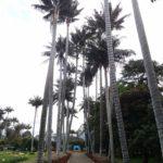 Jardín de alameda: Usos, cuidados y características