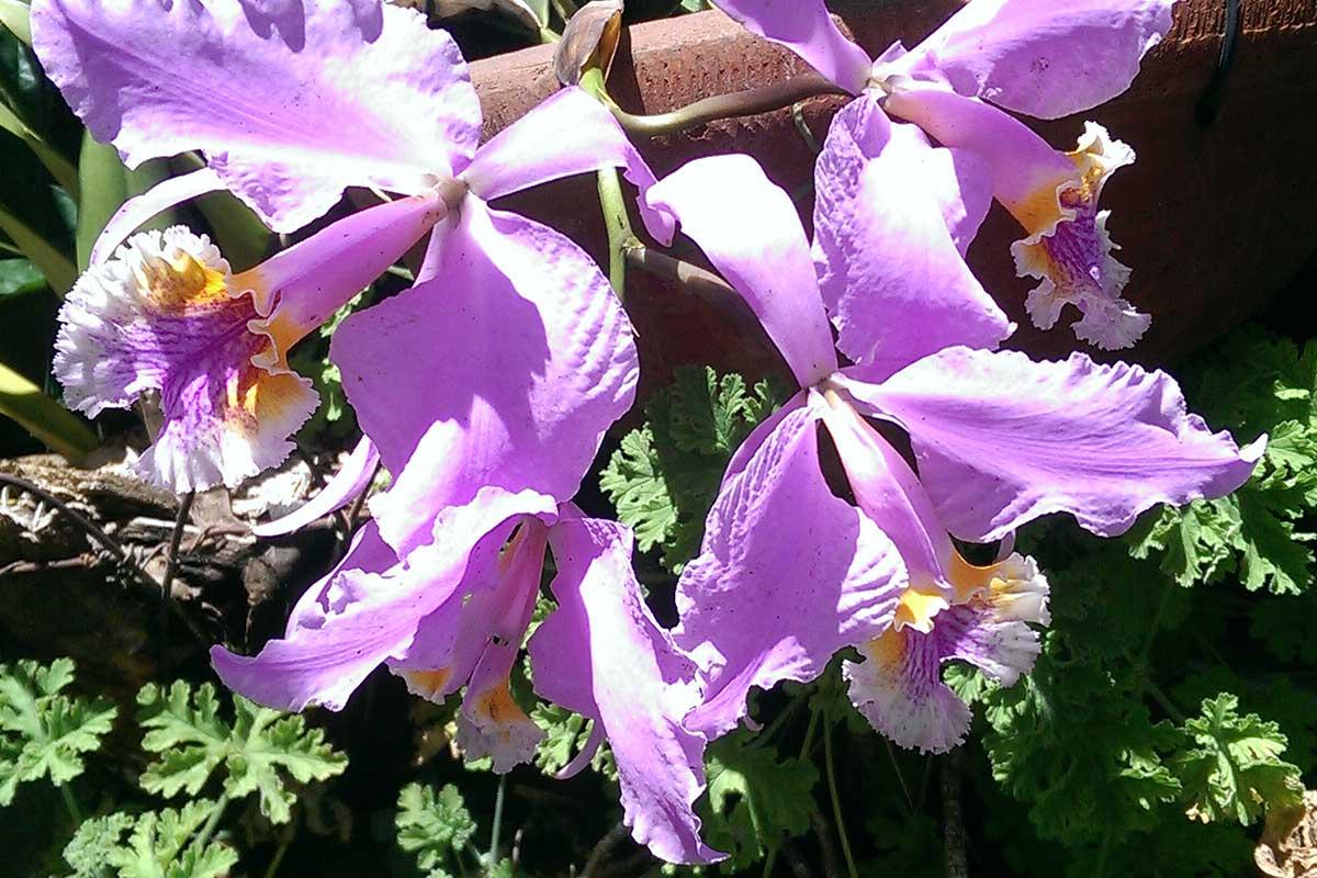 Jardín Botánico de Shanghai (Colección de orquídeas)