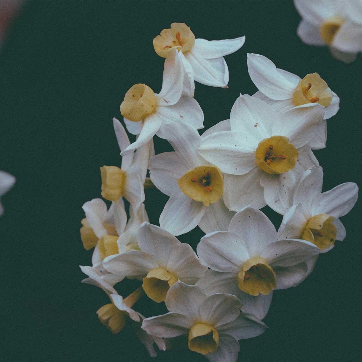 10 plantas ideales para sembrar en invierno