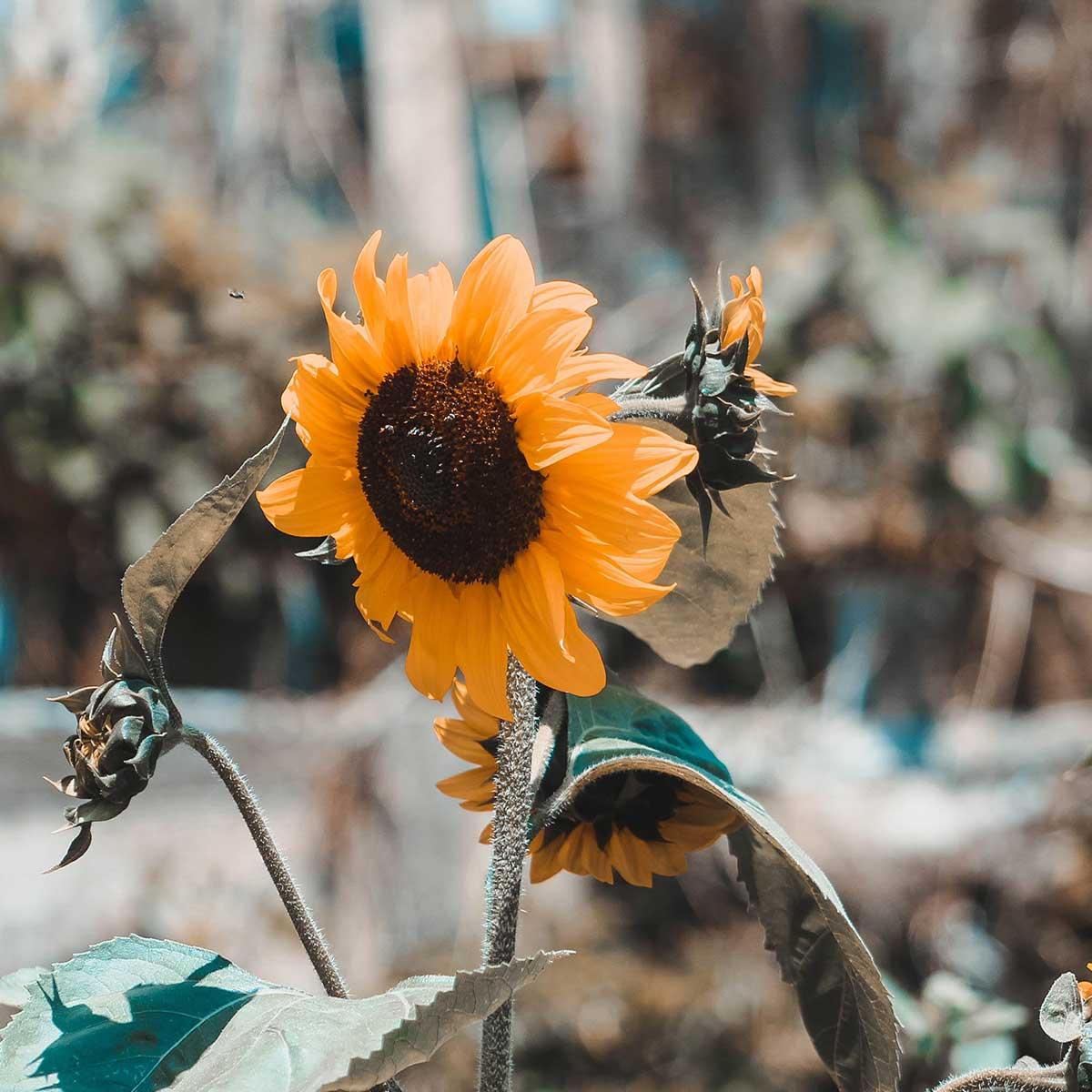 10 plantas ideales para sembrar en fin de año