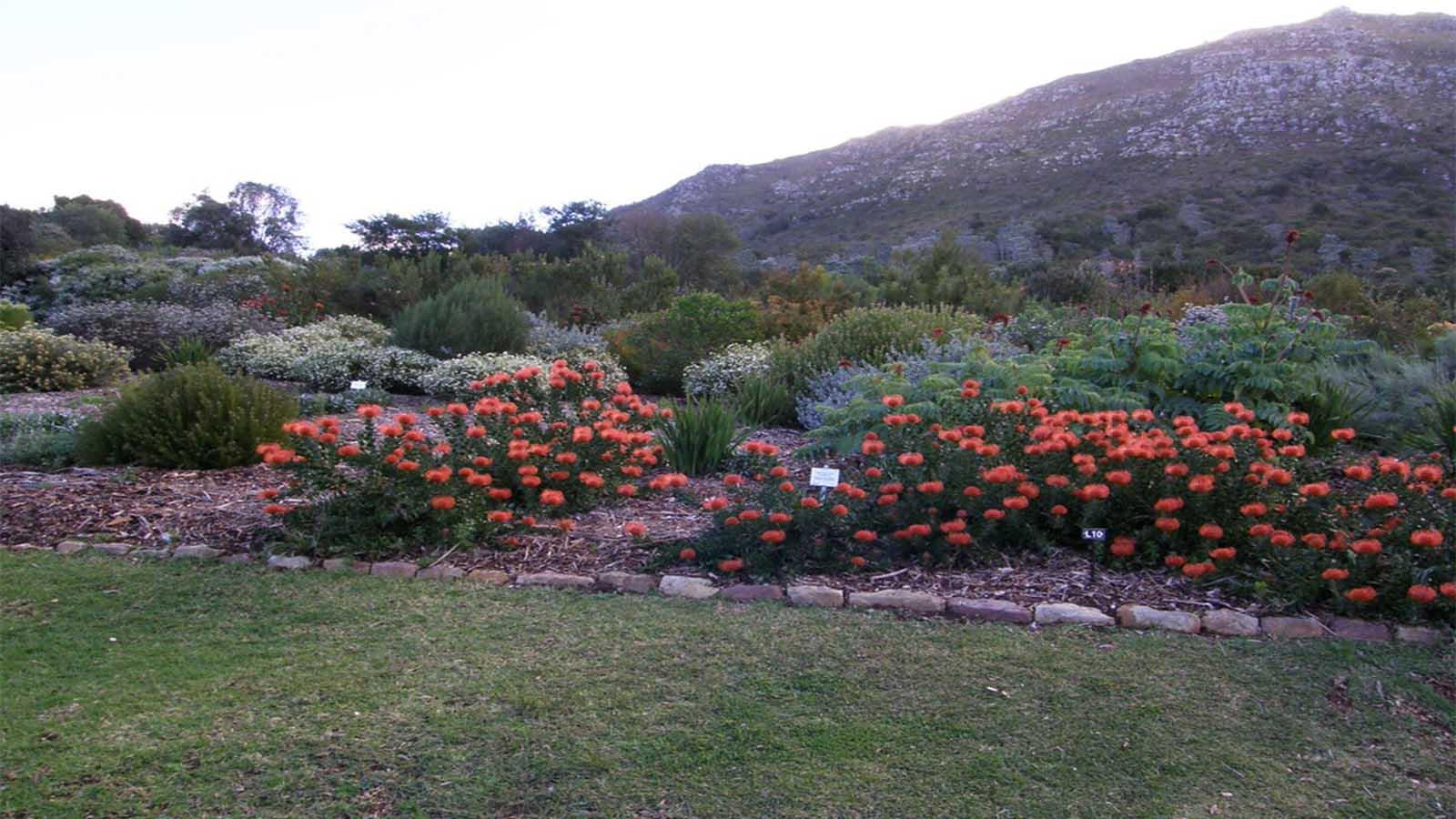 Jardín Botánico Nacional de Kirstenbosch 4