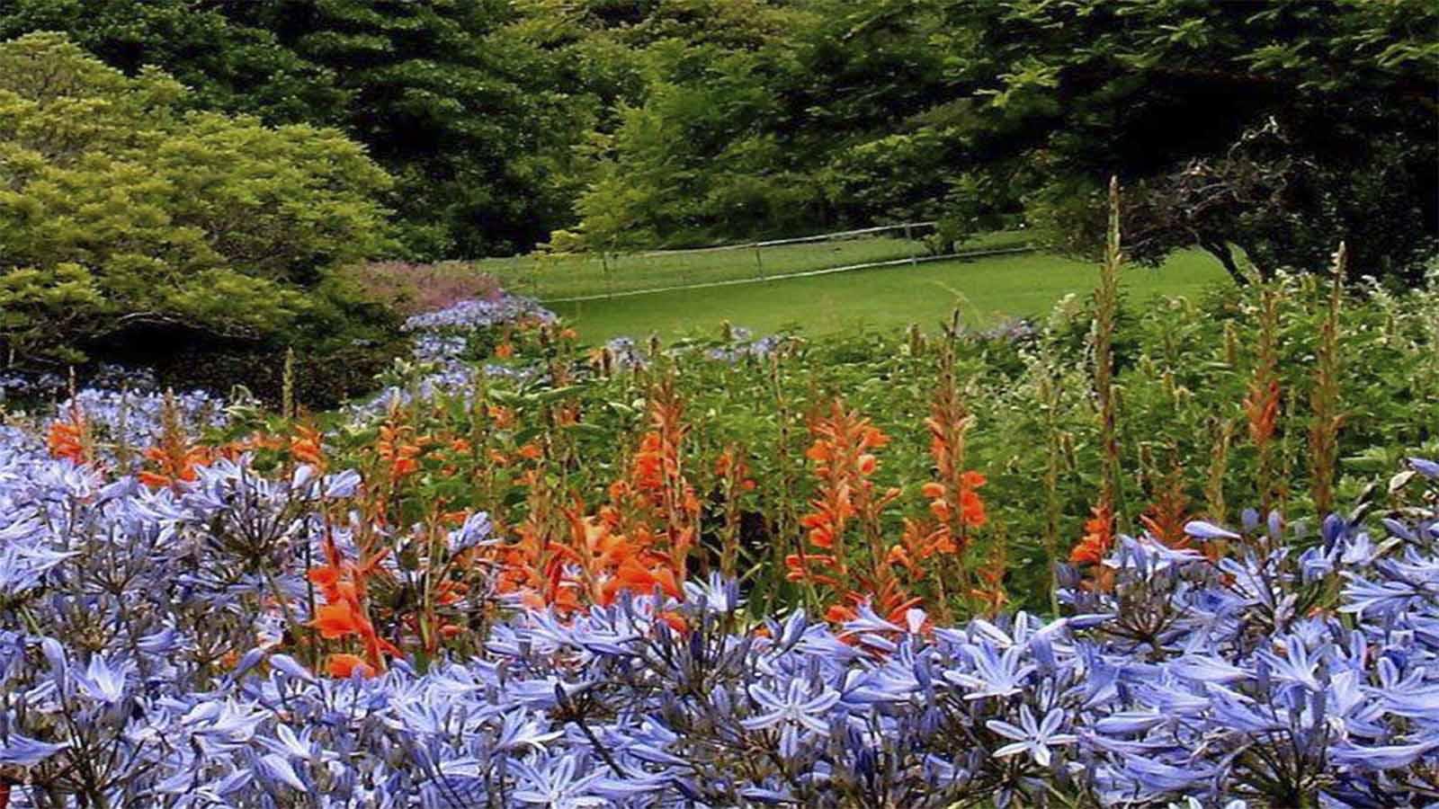 Jardín Botánico Nacional de Kirstenbosch 6