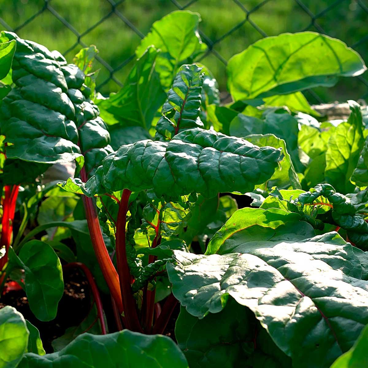 Plantas para sembrar al inicio de año