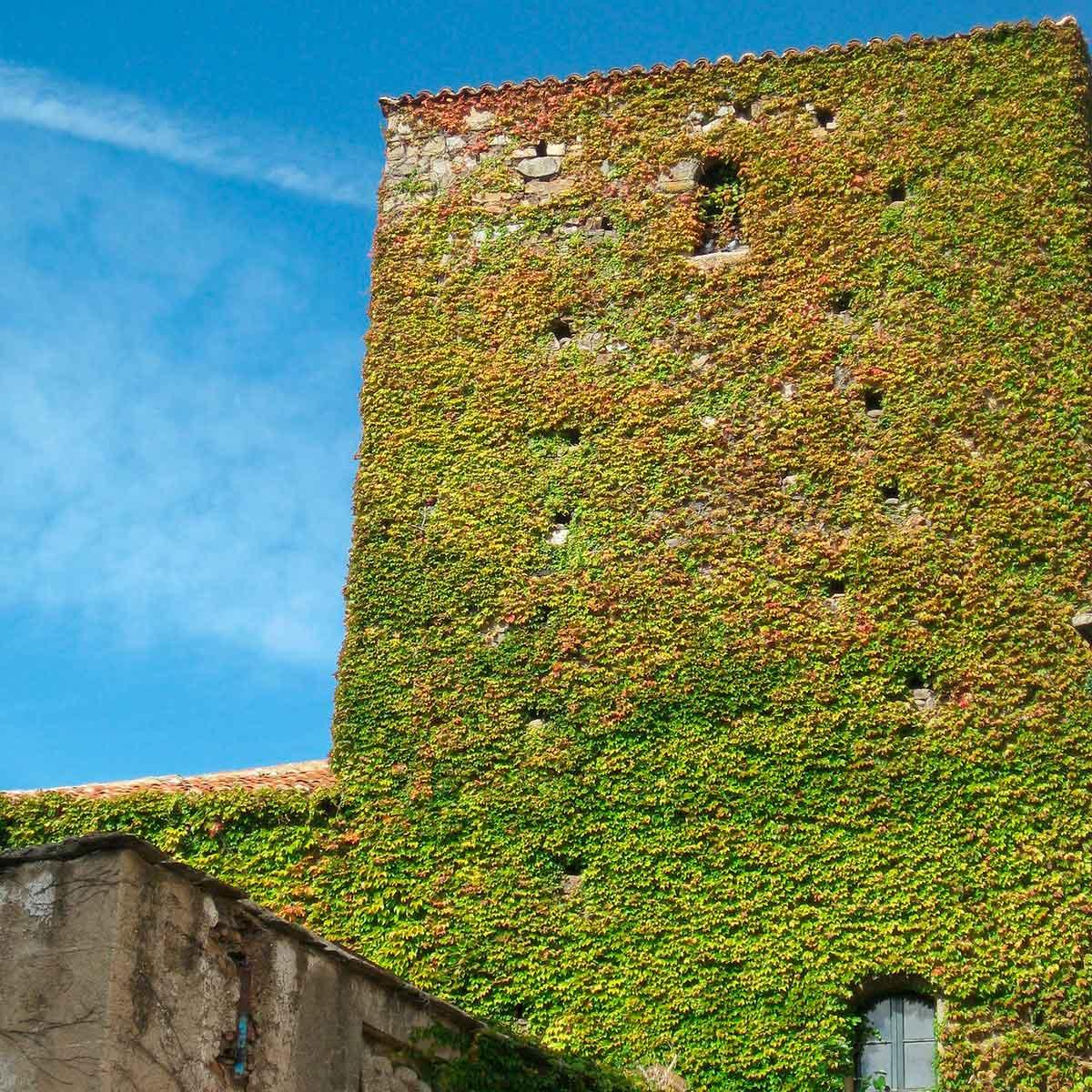 Tendencias de jardines verticales para interiores y exteriores