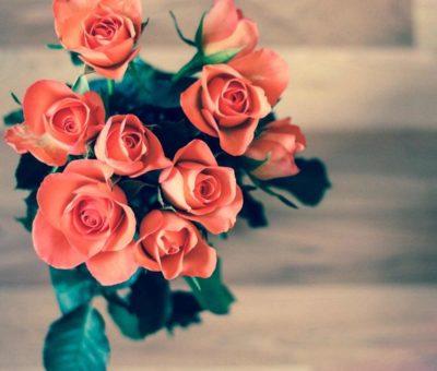 Mejores plantas para San Valentín