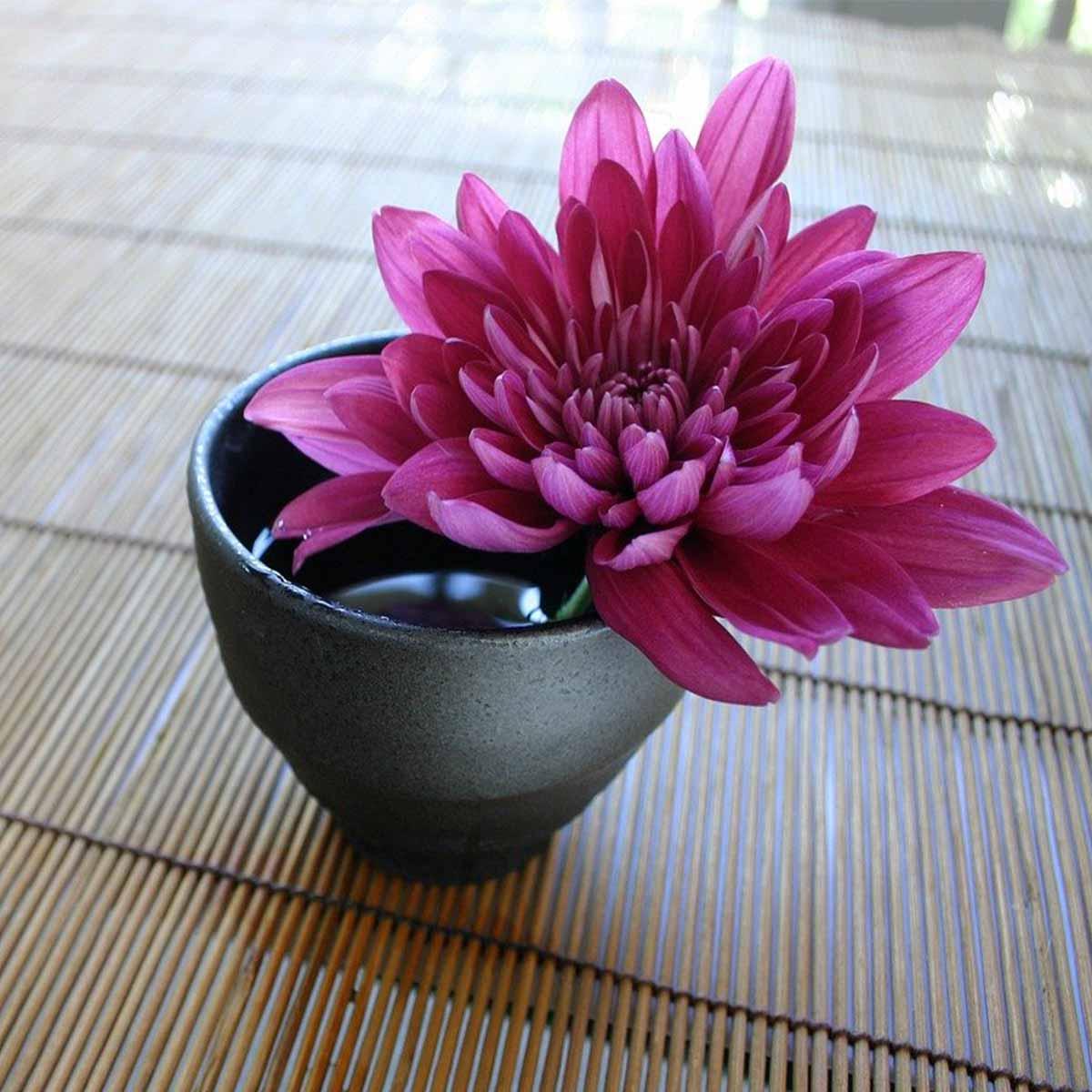Mejores plantas para San Valentín - Crisantemo