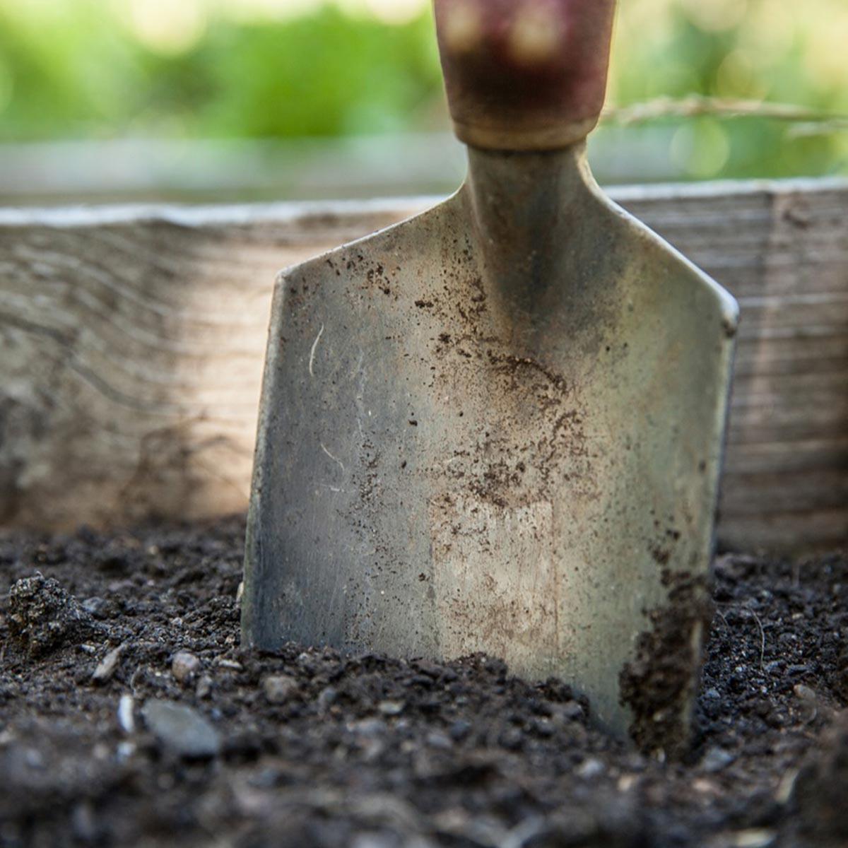 Jardín de secano: cómo crearlo, tips y recomendaciones