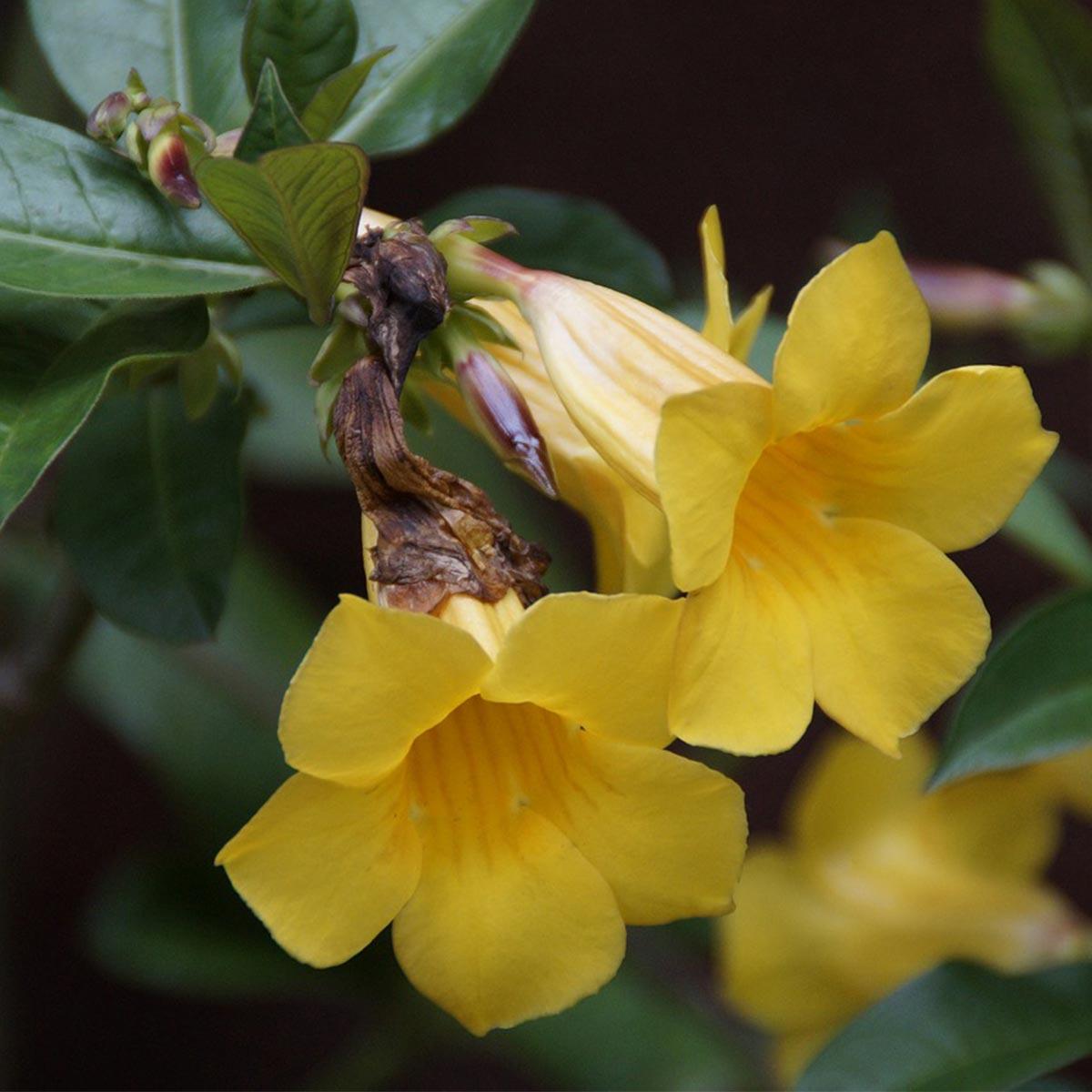 Arbustos florales para jardines residenciales