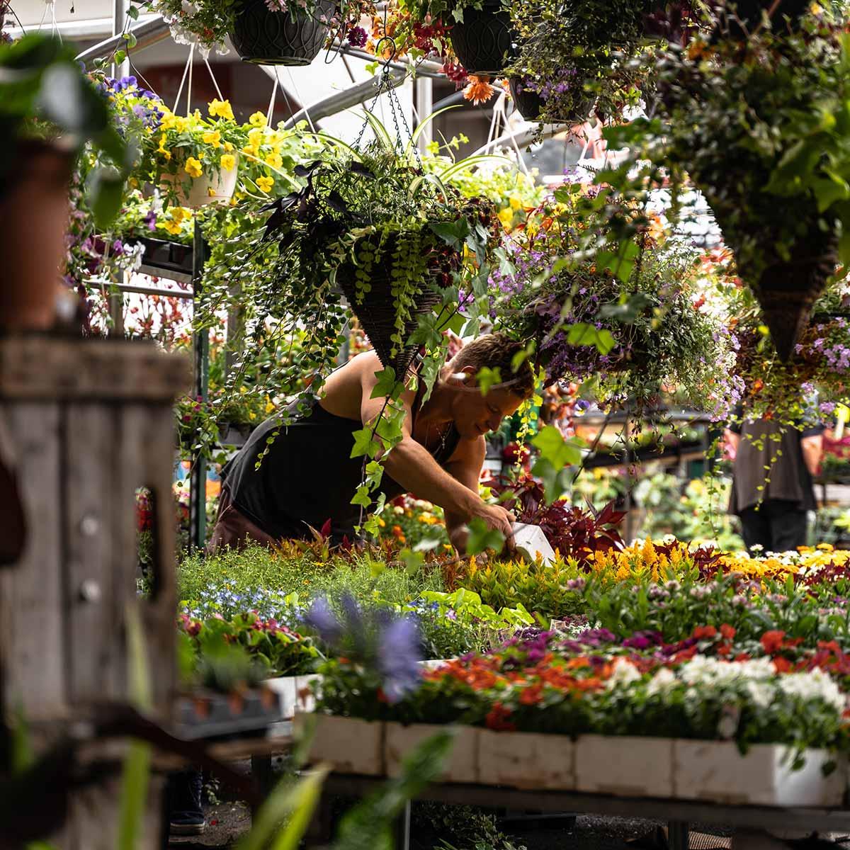 Jardines sustentables en casa