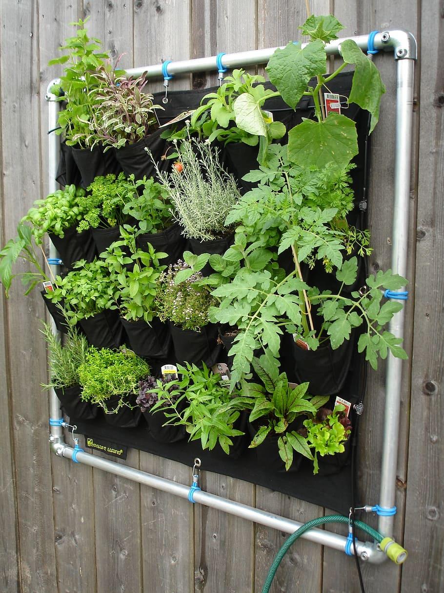 Jardín vertical doméstico