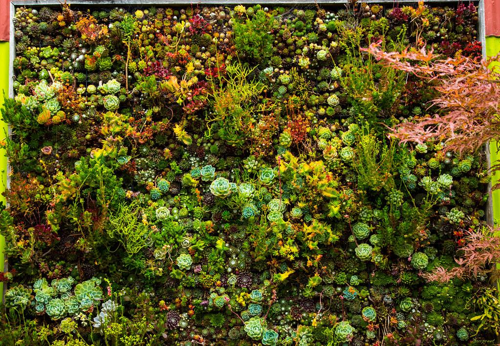 sistemas de riego para jardines verticales