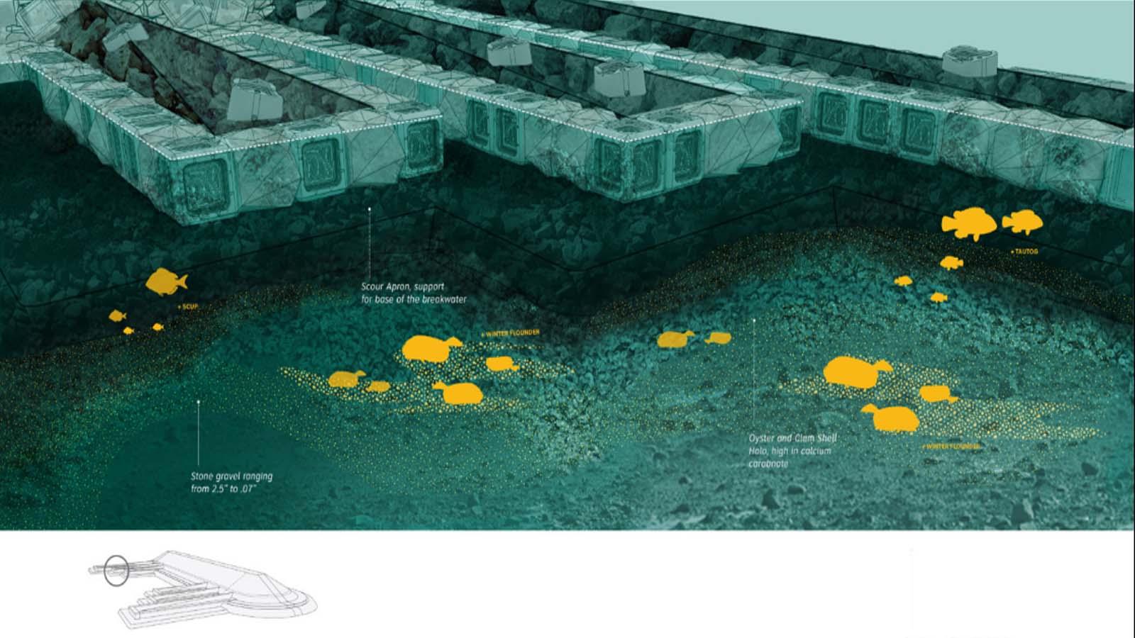Proyecto Living Breakwaters