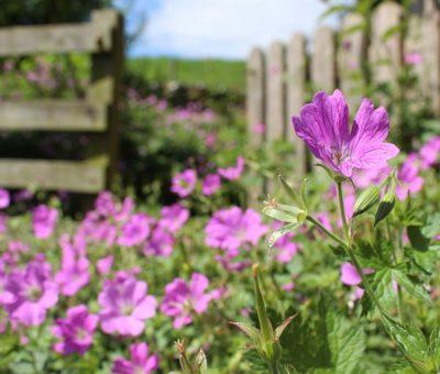 Jardines ingleses: Características, cuidados y tips para construirlo