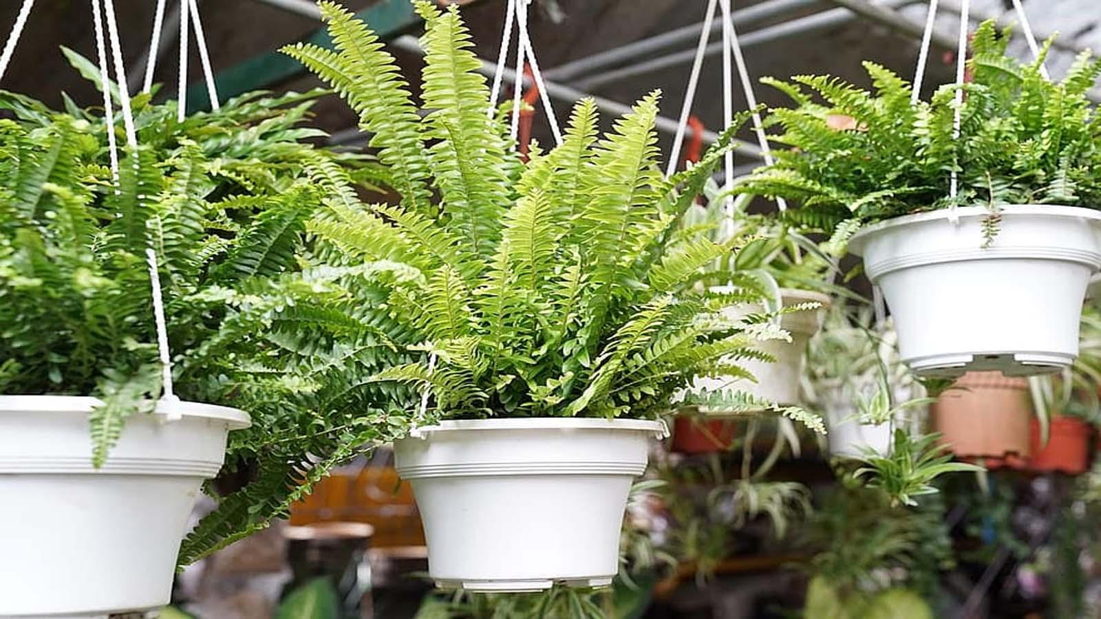 plantas ornamentales para jardines tropicales