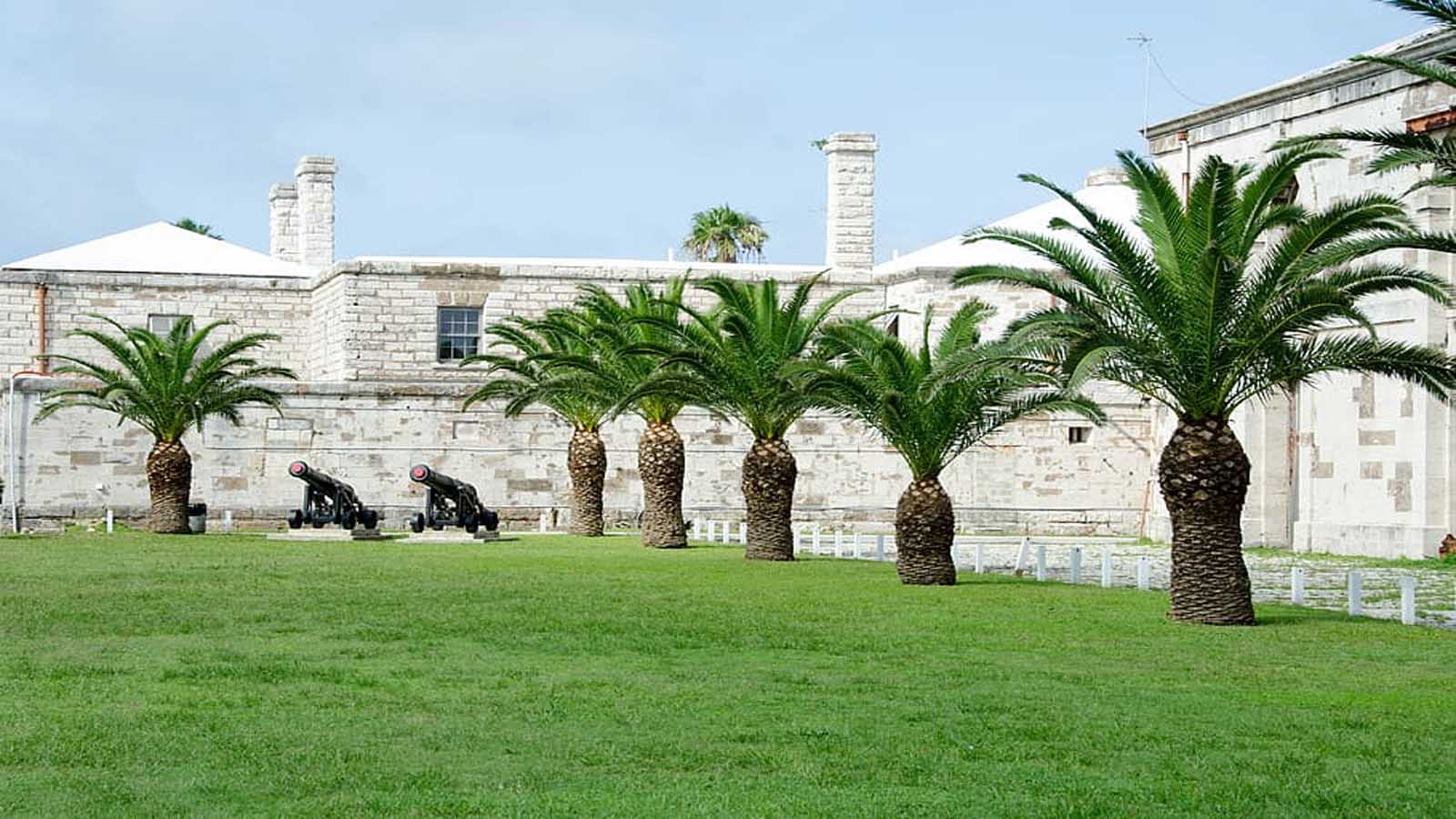 Césped bermuda (Bermuda grass)