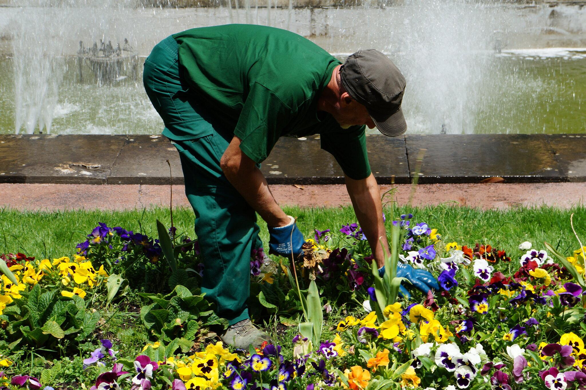 Beneficios de la jardinería paisajista