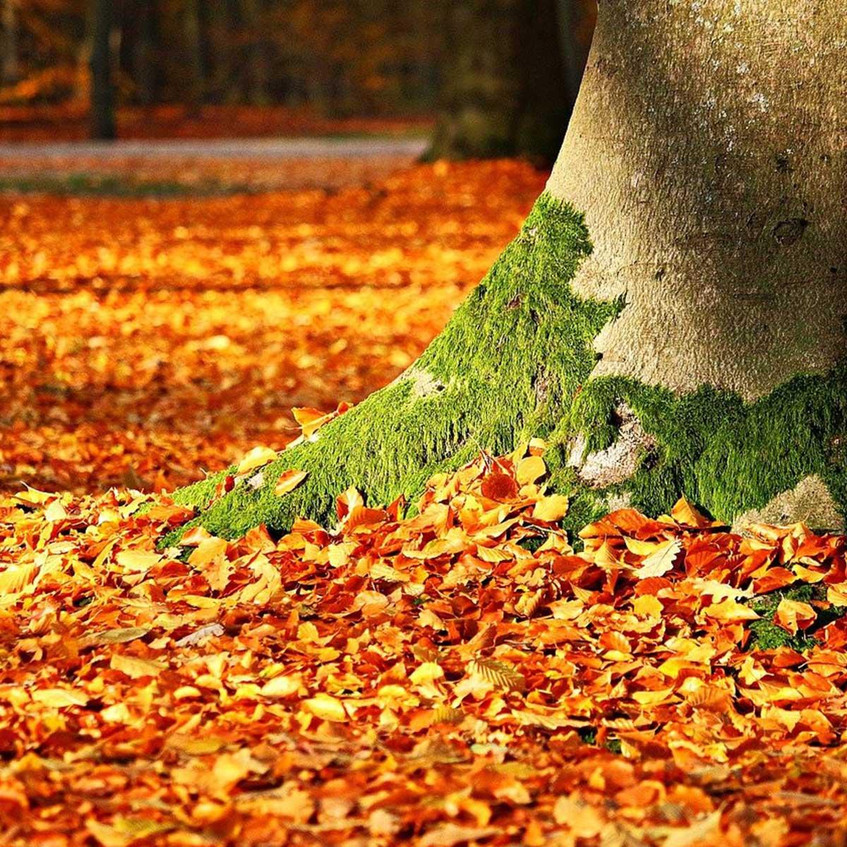 Jardín en temporada de otoño: 10 tareas claves para su cuidado - limpieza de hojas