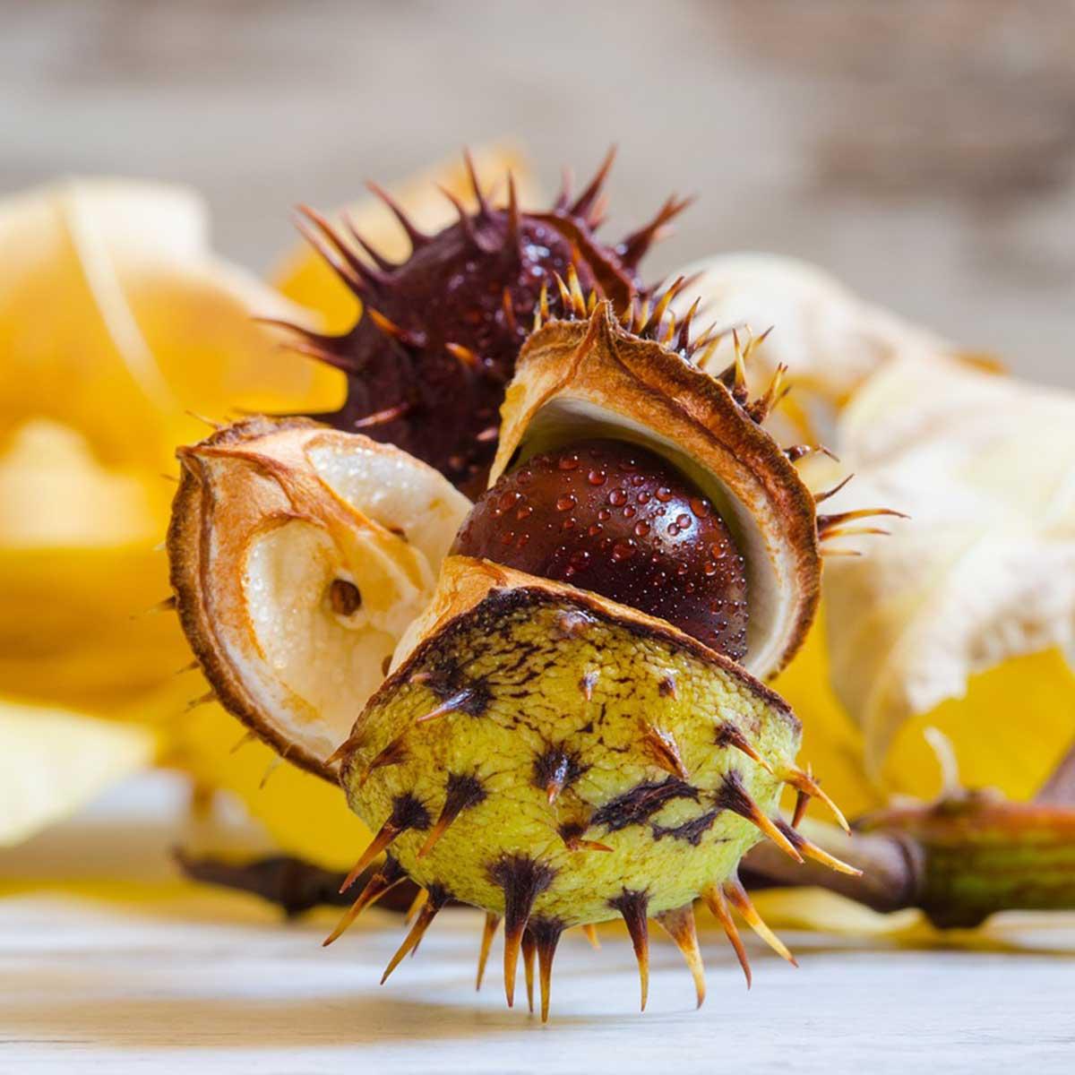 Jardín en temporada de otoño: 10 tareas claves para su cuidado - Cosecha de semillas
