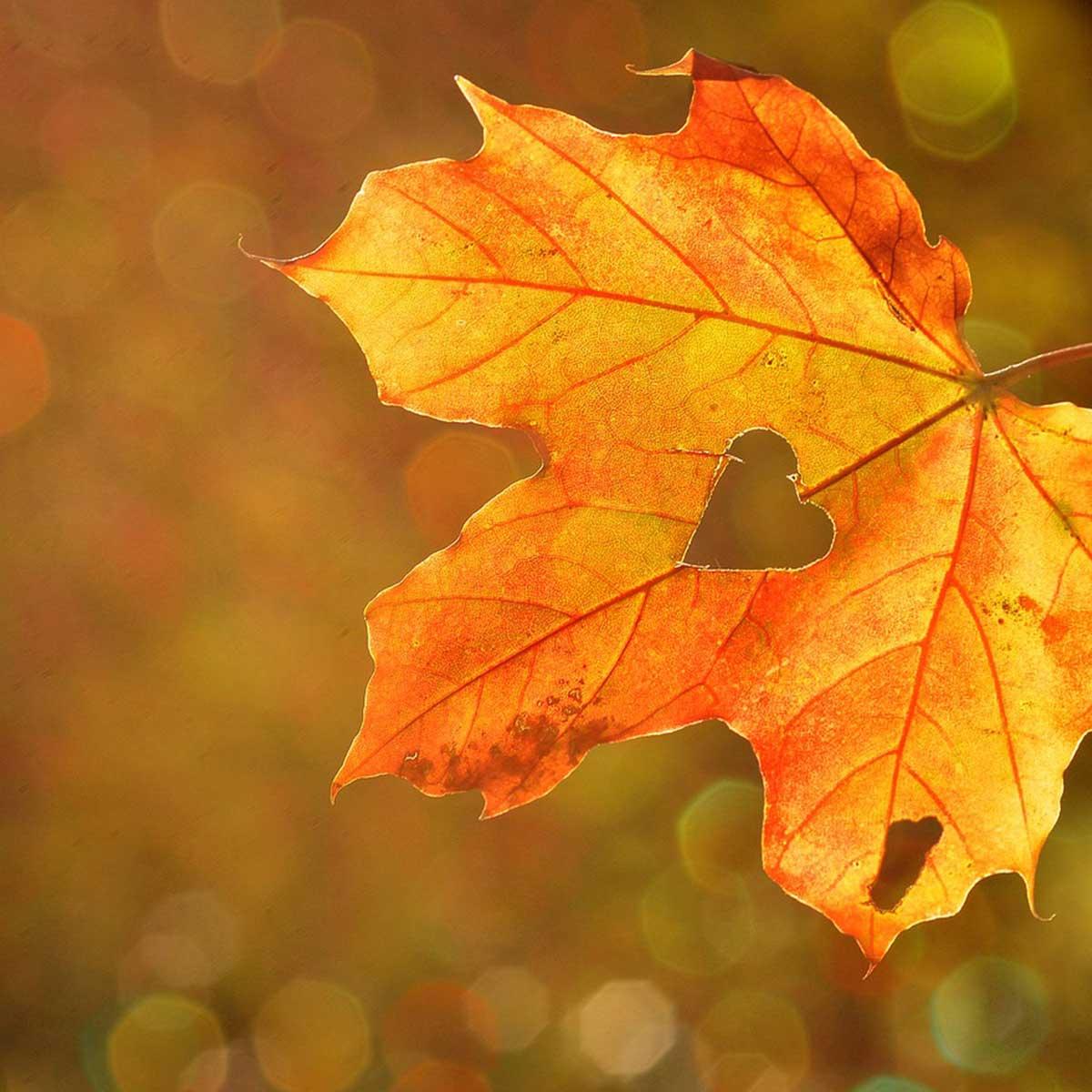 Jardín en temporada de otoño: 10 tareas claves para su cuidado